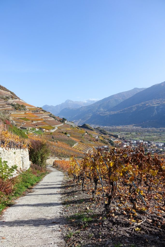 Vignes de Saint-Léonard
